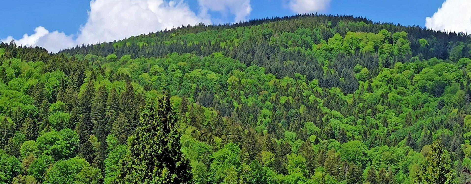 Black Forest Soul Walk